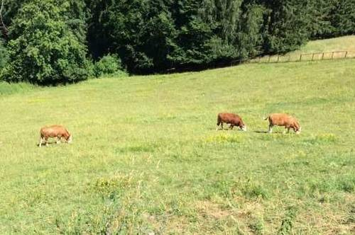 Bauernhof mit 12 ha Grund, Fernsicht