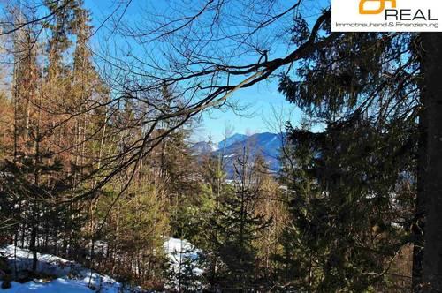 Geldanlage:Waldparzelle in Ludmannsdorf