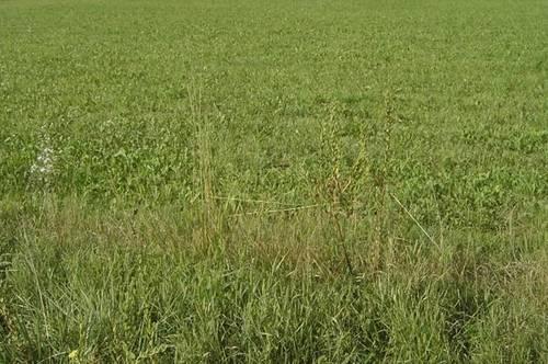 2 Grundstücke Seiersberg-Pirka, landwirtschaftlich als Acker genützt (drainagierte Flächen), Nahe der Packerstraße