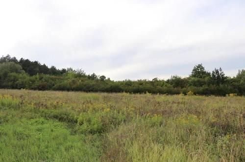 Wiennähe - Grünland mit Wald und landwirtschaftlicher Nutzung