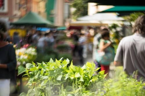 VITANEUM - LEBEN AM MARKT<br /><br />Exclusive Innenstadt Wohnung mit Garten