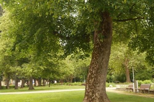 5ZI mit Charme generalsaniert, barrierefrei beim Stadtpark, LCS