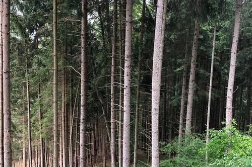 +++ 115 ha Forst / Waldbesitz - nahe Innsbruck +++