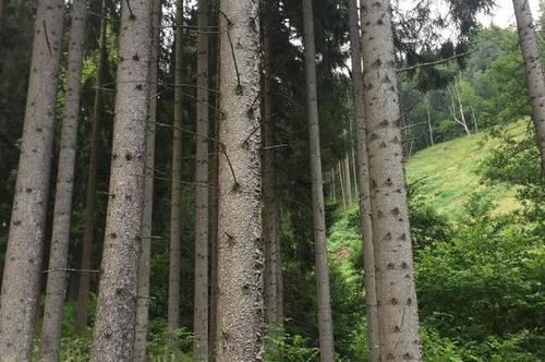 25 ha idyllischer Bergbauernhof im Lavanttal