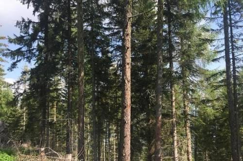 8,6 ha Bauernsacherl mit Panoramablick