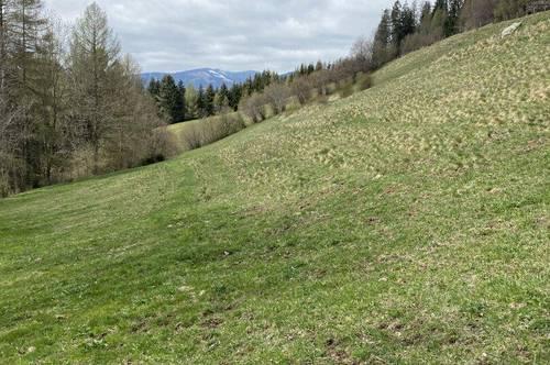 +++ 3,2 ha Mähwiese / Weide für Viehtrieb +++