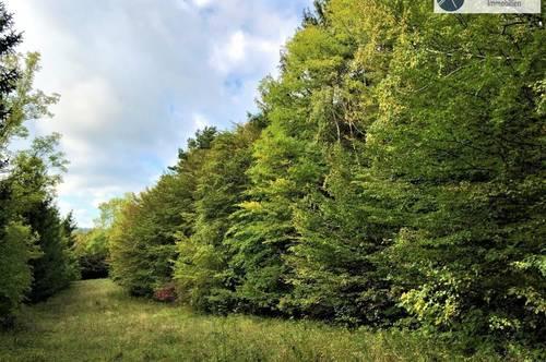 Wald und Wiesenflächen am Hausberg der Wachau