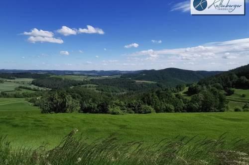 """Kleiner Wald - """"Energieholz"""" & Buchen"""
