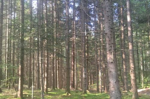 8,5 ha Wald, Viktring Klagenfurt, zu kaufen.