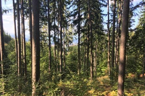 Klagenfurt Neudorf 12,1 ha Wald zu verkaufen
