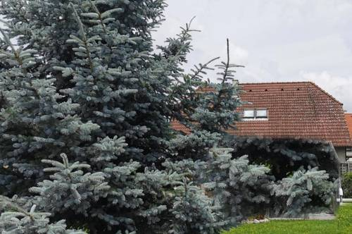 Haus auf Eigengrund - 657m² Grundfläche - Weikendorf - 5 Zimmer