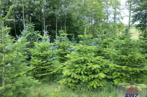 TOP!!!! Verkaufe ca. 20 ha schönen Wald im Sauwald