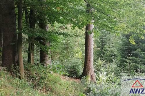 Eine ca. 3 ha große Waldfläche in St. Leonhard bei Freistadt zu verkaufen!