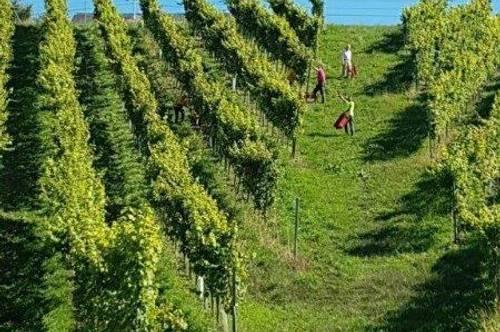 Südsteiermark - Schönes Anwesen im Schilcherland!