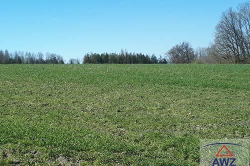 Schöner ca. 1.4 ha Acker im Bezirk Mattersburg zu verkaufen!
