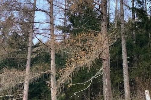 Sehr schöner Wald nähe Gröbming!