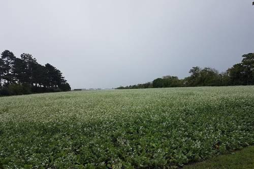 Ebene Ackerfläche mit Bewässerungsmöglichkeit zu verkaufen!
