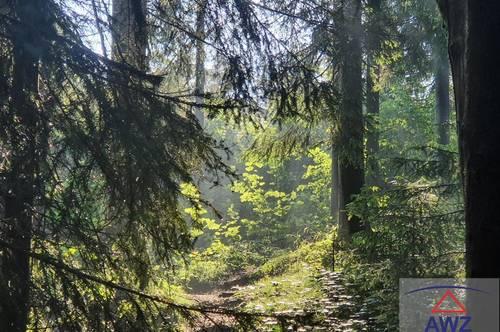 Schöner Forstbetrieb mit ca. 32 ha im unteren Ennstal