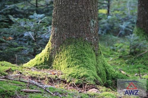 Wald und Natur!