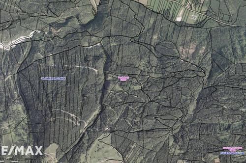 Waldparzellen in Vorderberg