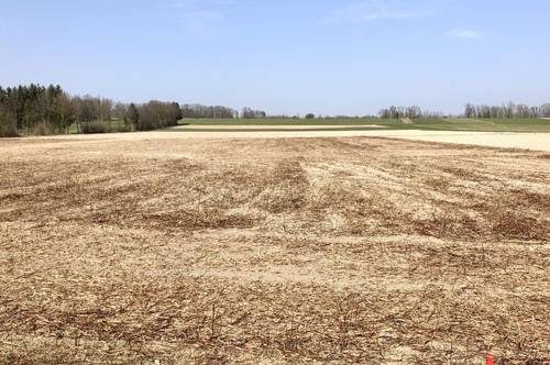 Schönes ebenes landwirtschaftliches Grundstück in Waizenkirchen