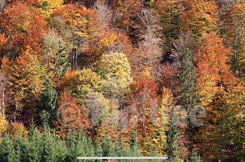 Sichere Dir Dein Stück Wald im Burgenland - !!! PROVISIONSFREI !!!