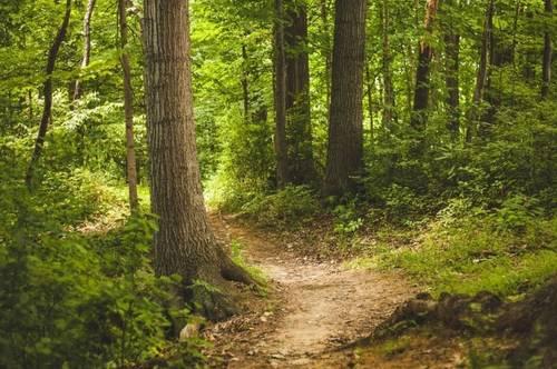 Wald Grundstück