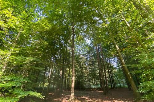 Waldgrundstücke in Olbendorf - Bezirk Güssing