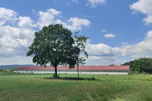 Halle für Tierzucht in Kombination mit Photovoltaik