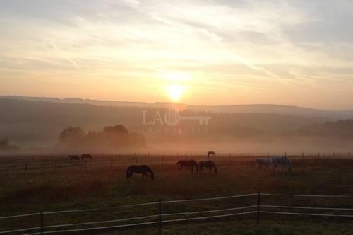 Charmante Reitanlage - Einzigartiges Paradies für Pferde- und Naturliebhaber