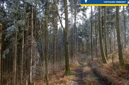 <b>Waldfläche im Raum Strengberg-Wolfsbach</b>