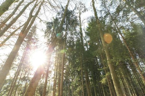 Waldgrundstücke - Für zukünftige Generationen vorsorgen