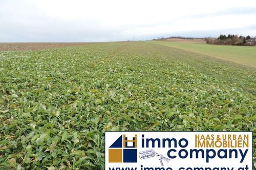 Ackerland in Sigleß einmal mit 10000m² und einmal mit ca. 4700m² zu verkaufen