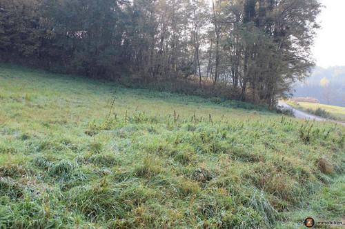 Schönes Grundstück in Oberdorf!