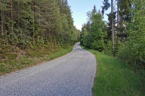 3,4 ha Wald auf der Saualpe, nicht weit von Pustritz