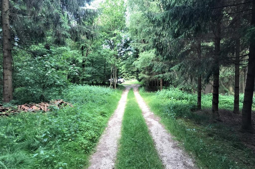 Bestens bewirtschafteter Wald mit knapp 2,6ha Größe - Gemeindegebiet Enzenkirchen