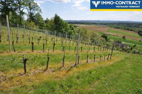Traumlage im Südburgenland - Buschenschank mit Weinbergen