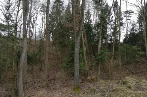 Waldgrundstück in der KG Weisching