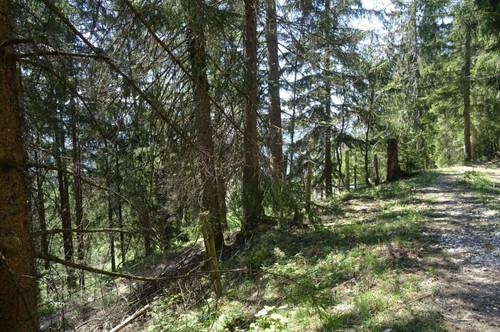 Verkauf einer Grundstücksparzelle in Voglau/Abtenau KG Rigaus Gst. Nr. 677