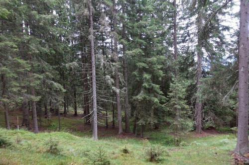 6,5 HA Waldparzelle in Gemeinde Arriach, arrondierte Fläche, 20 bis 70 jähriger Bestand