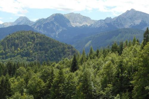 Bestens gepflegter Forstbesitz in wunderbarer Gebirgslandschaft