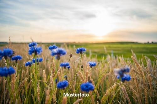 Gärtnerei - Versteigerungsobjekt-