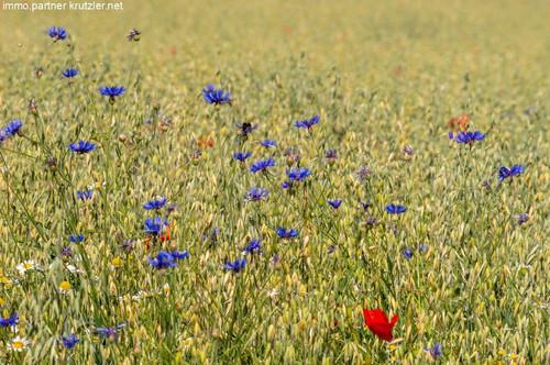 Grünland - nächst Gewerbegebiet - in Oberwart zu erwerben