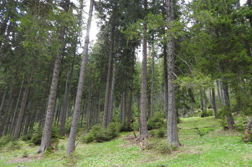 Wir suchen einen Forst & Jagdbetrieb mit mehr als 2.000 ha