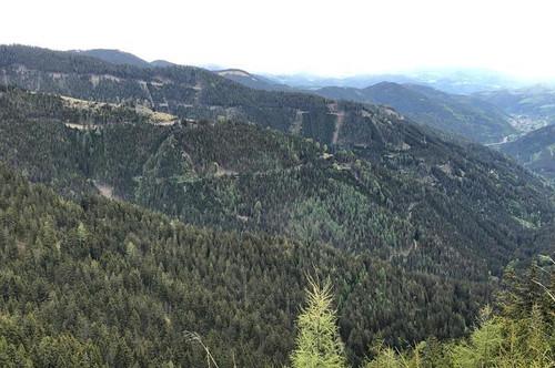 ca. 600 ha Forstbesitz in Obersteiermark