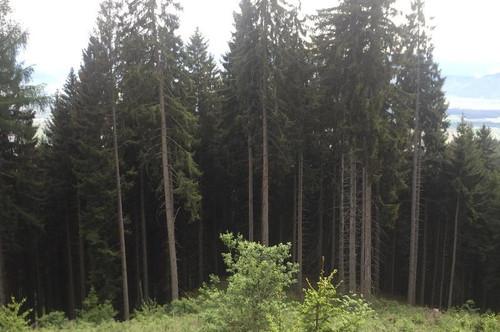 44,50 ha Waldbesitz in Murtal zu verkaufen (auch teilbar)