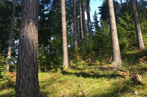 3,7 ha Wald, Klagenfurt-Süd, zu kaufen.