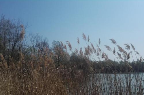 Riesiges Landgut mit Herrschaftsvilla und großem Teich im Burgenland