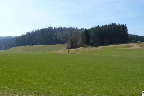 7 ha Wiese mit anteiligem Wald für Landwirtschaft oder Gartenbau